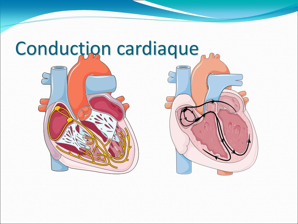 Conduction cardiaque