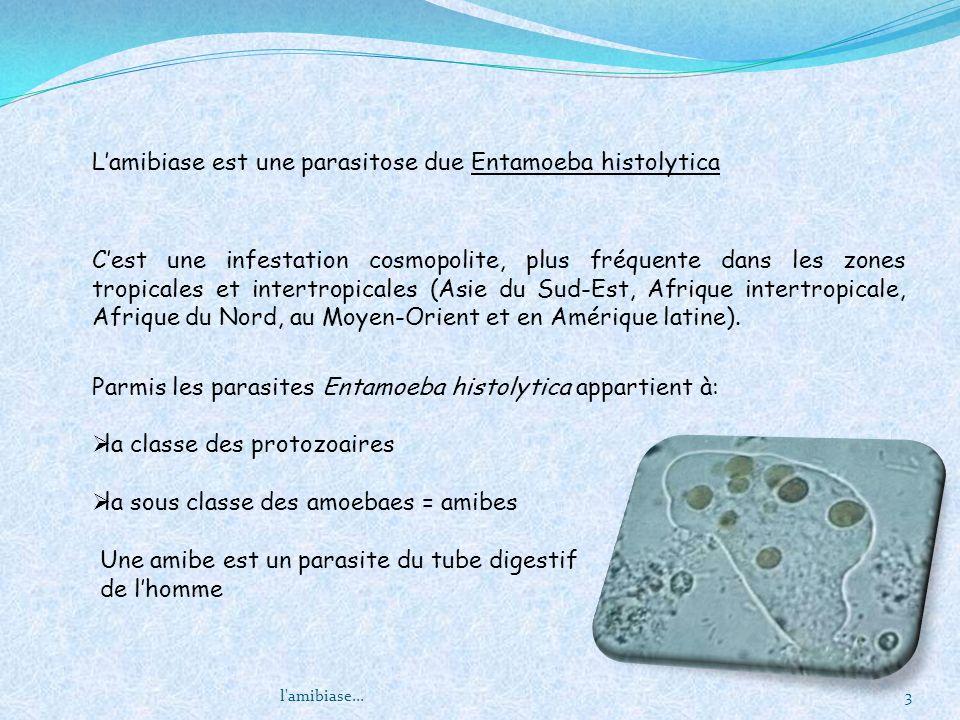 L'amibiase est une parasitose due Entamoeba histolytica