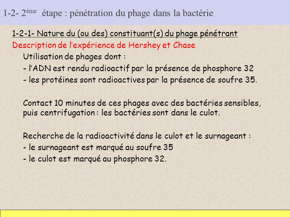 1-2- 2ème étape : pénétration du phage dans la bactérie