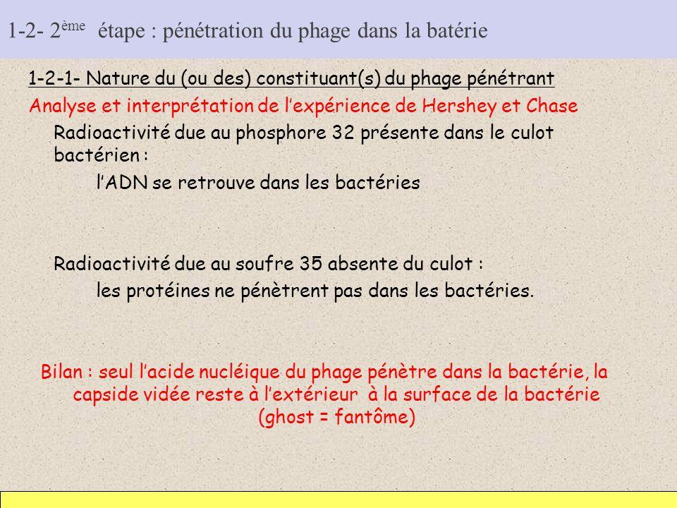 1-2- 2ème étape : pénétration du phage dans la batérie