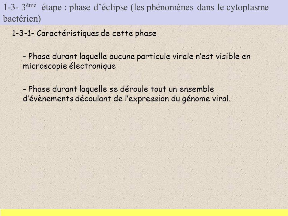 1-3- 3ème étape : phase d'éclipse (les phénomènes dans le cytoplasme bactérien)