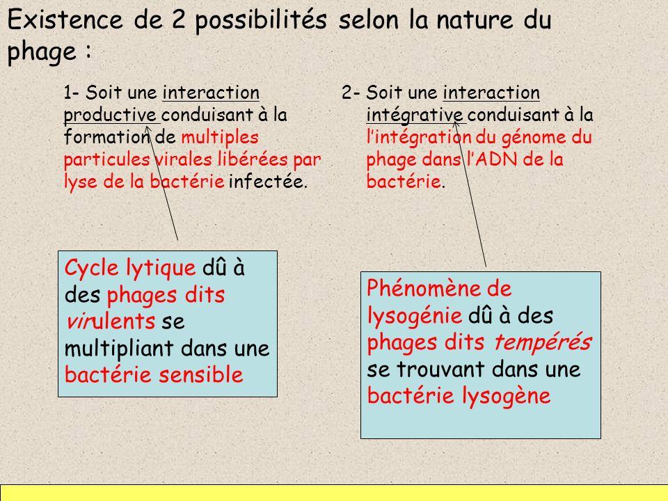 Existence de 2 possibilités selon la nature du phage :