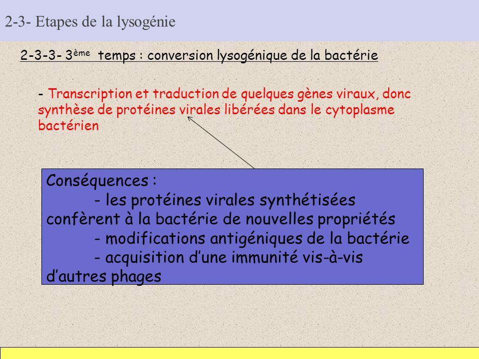 2-3- Etapes de la lysogénie