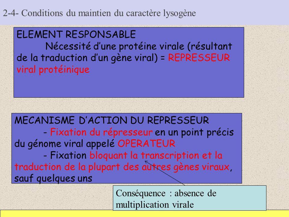 2-4- Conditions du maintien du caractère lysogène