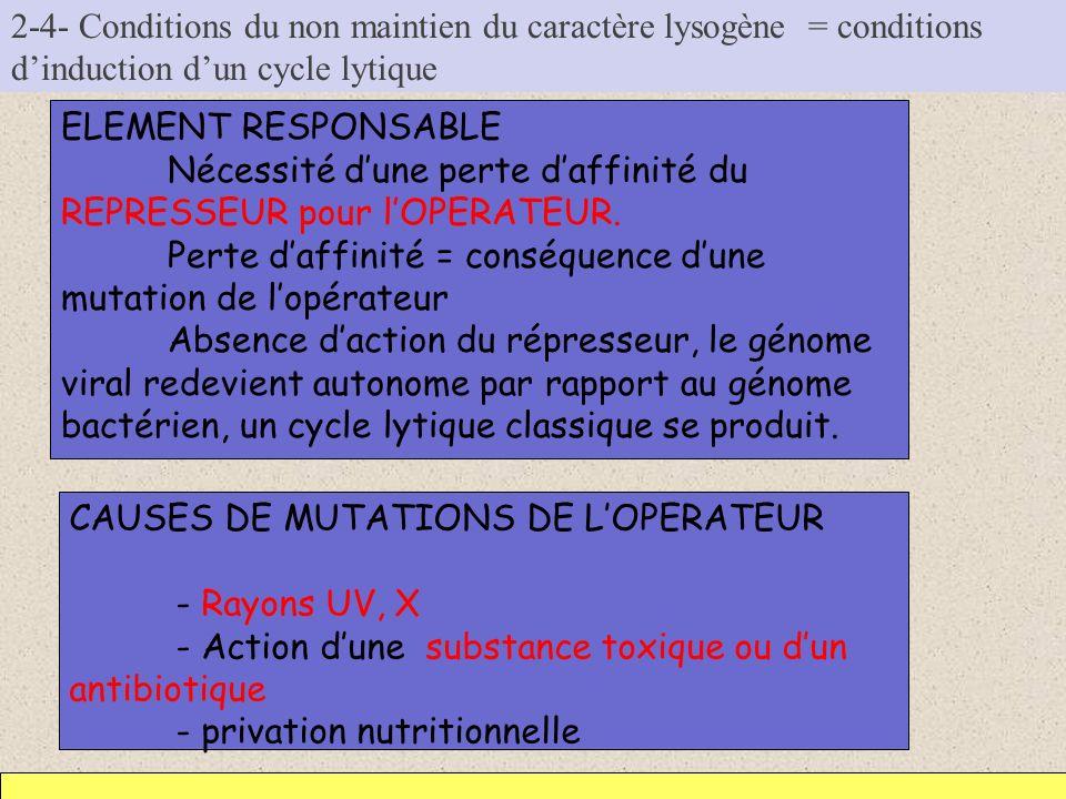 2-4- Conditions du non maintien du caractère lysogène = conditions d'induction d'un cycle lytique