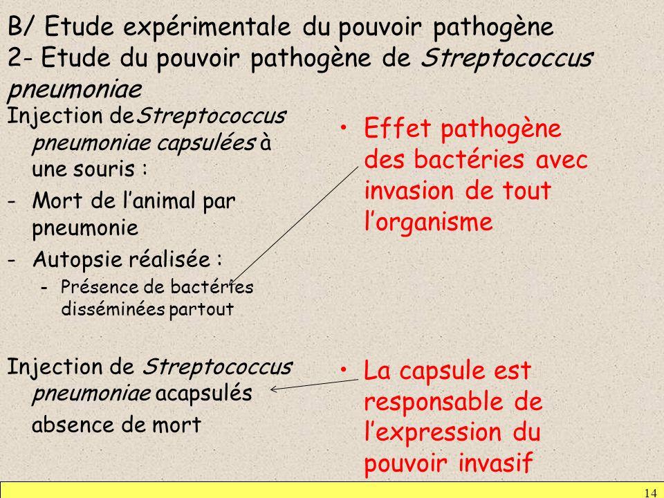 Effet pathogène des bactéries avec invasion de tout l'organisme