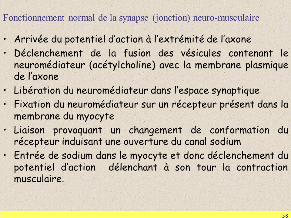 Fonctionnement normal de la synapse (jonction) neuro-musculaire