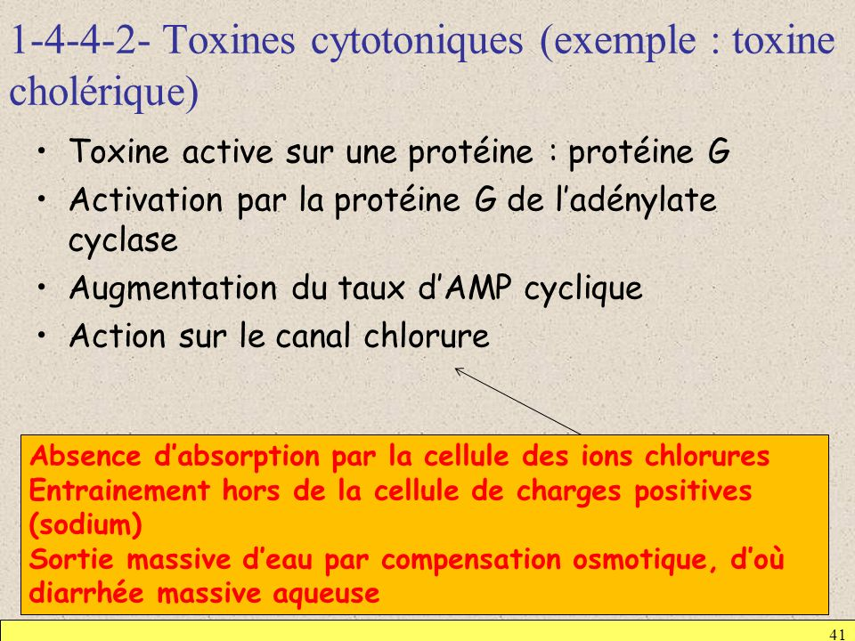 1-4-4-2- Toxines cytotoniques (exemple : toxine cholérique)