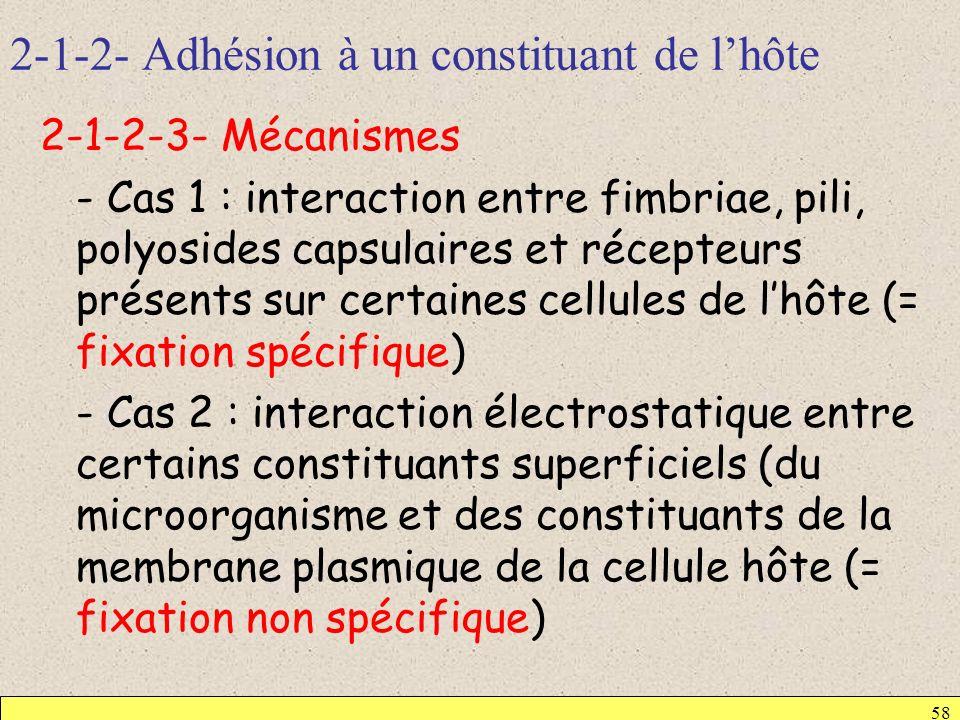 2-1-2- Adhésion à un constituant de l'hôte