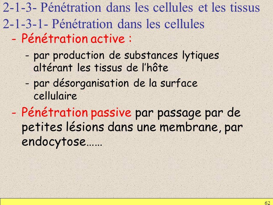 2-1-3- Pénétration dans les cellules et les tissus 2-1-3-1- Pénétration dans les cellules