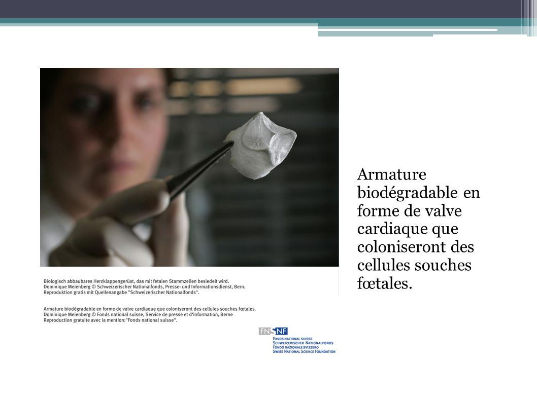 Armature biodégradable en forme de valve cardiaque que coloniseront des cellules souches fœtales.