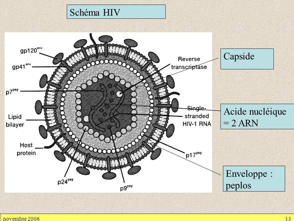 Schéma HIV Capside Acide nucléique = 2 ARN Enveloppe : peplos
