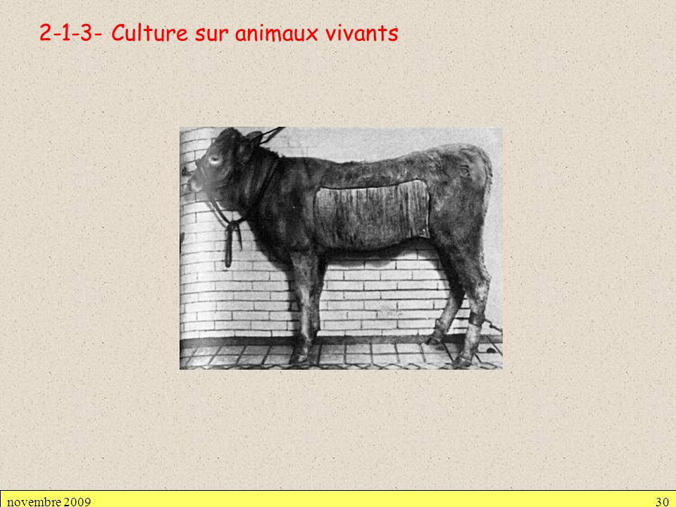 Culture sur animaux vivants