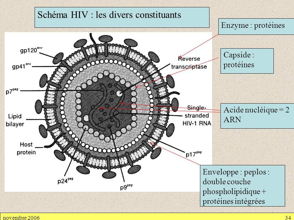 Schéma HIV : les divers constituants