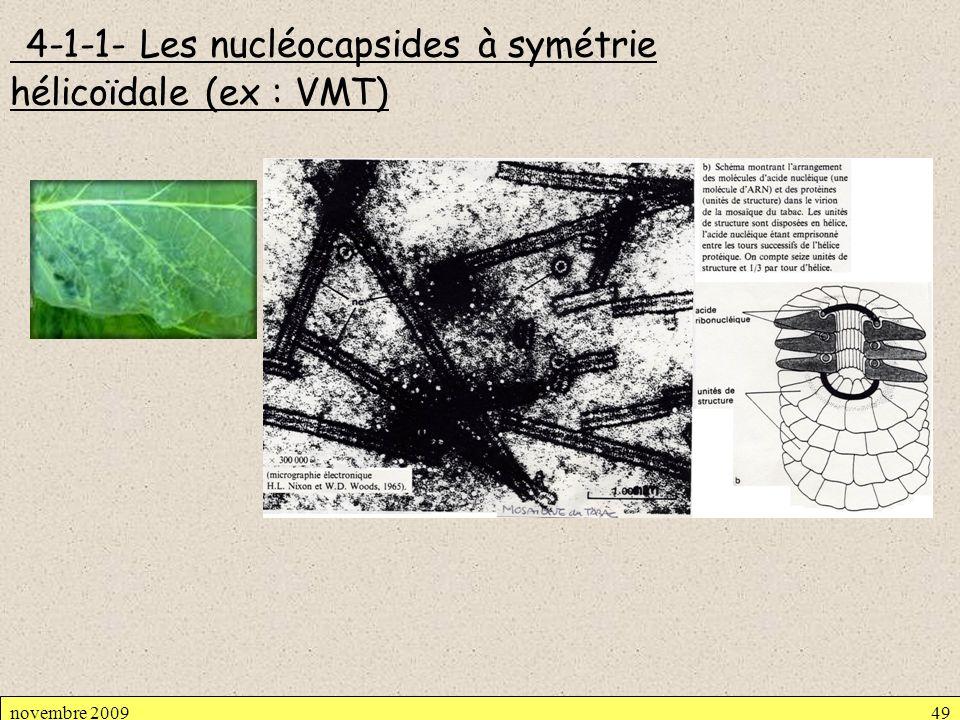 4-1-1- Les nucléocapsides à symétrie hélicoïdale (ex : VMT)