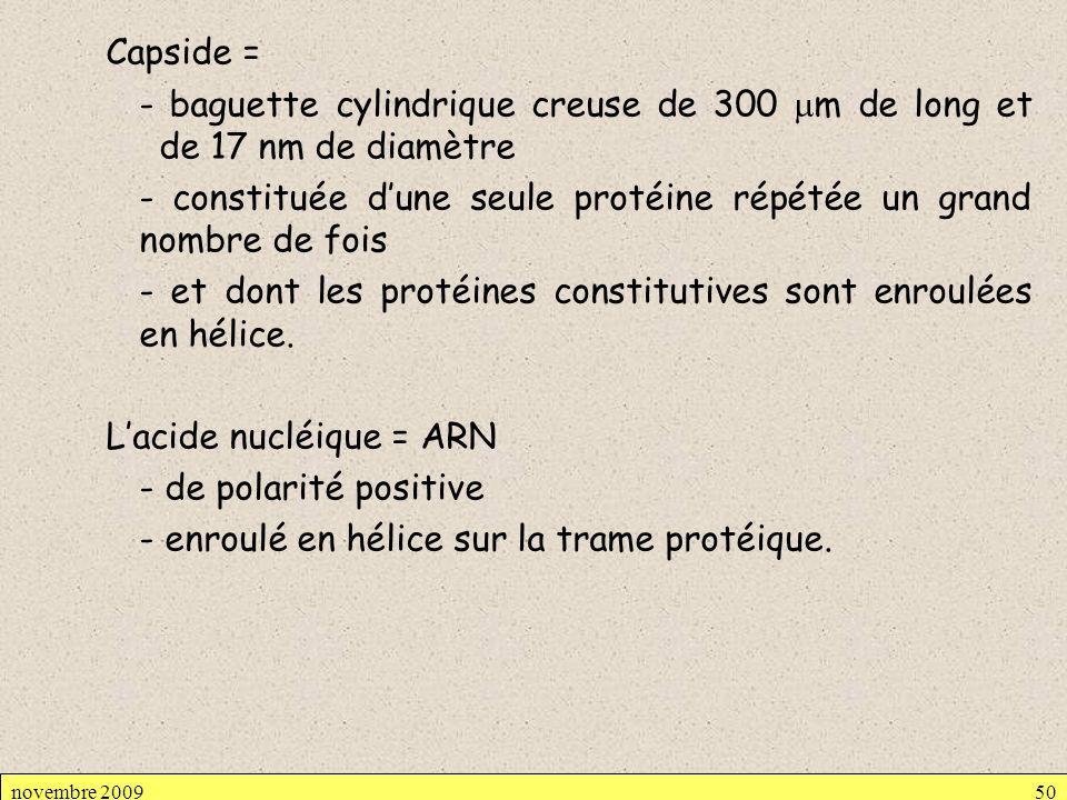 Capside = - baguette cylindrique creuse de 300 mm de long et de 17 nm de diamètre - constituée d'une seule protéine répétée un grand nombre de fois - et dont les protéines constitutives sont enroulées en hélice. L'acide nucléique = ARN - de polarité positive - enroulé en hélice sur la trame protéique.