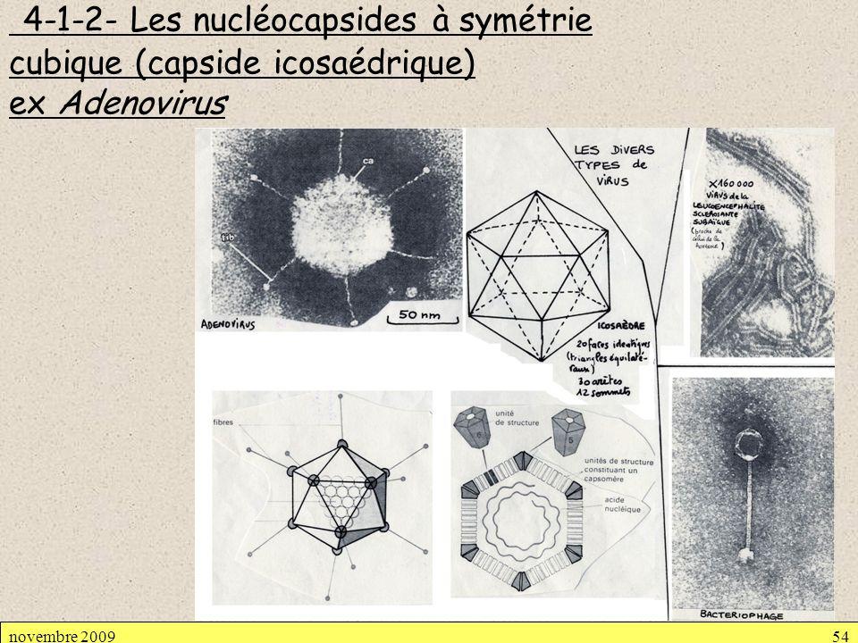 4-1-2- Les nucléocapsides à symétrie cubique (capside icosaédrique) ex Adenovirus