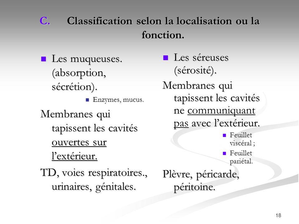 Classification selon la localisation ou la fonction.