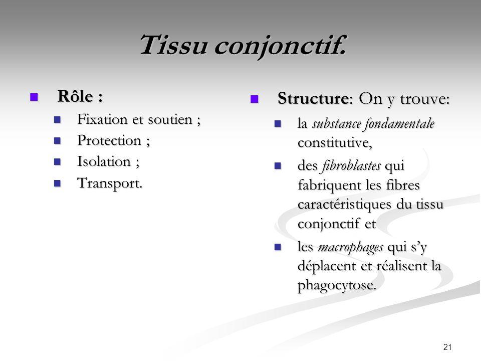 Tissu conjonctif. Rôle : Structure: On y trouve: Fixation et soutien ;