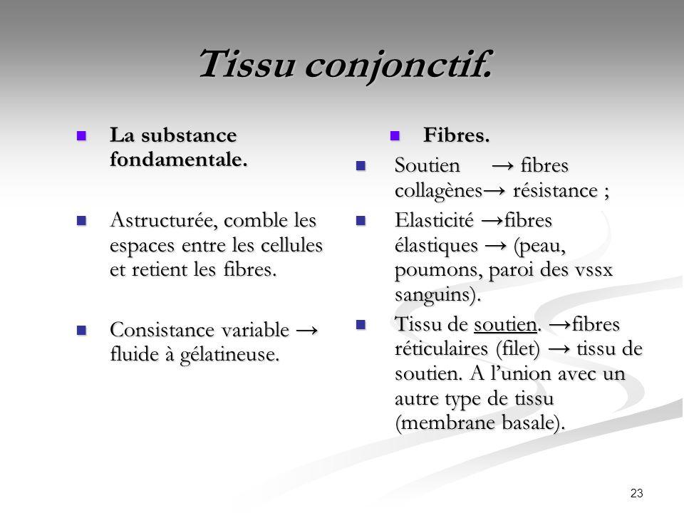 Tissu conjonctif. La substance fondamentale.