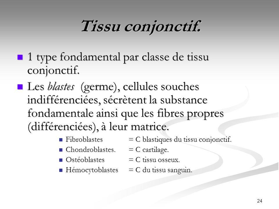 Tissu conjonctif. 1 type fondamental par classe de tissu conjonctif.