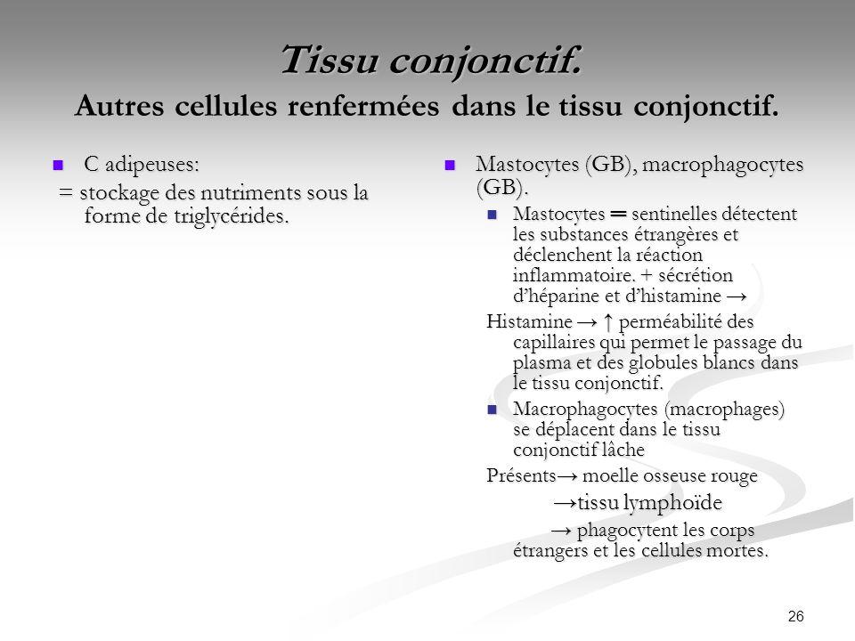 Tissu conjonctif. Autres cellules renfermées dans le tissu conjonctif.