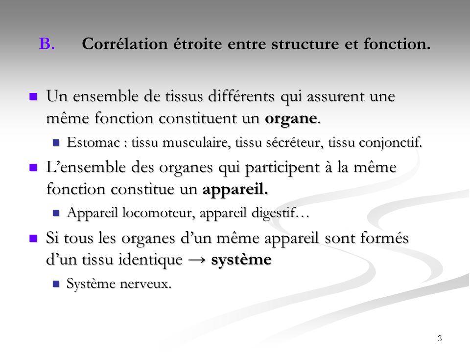 Corrélation étroite entre structure et fonction.