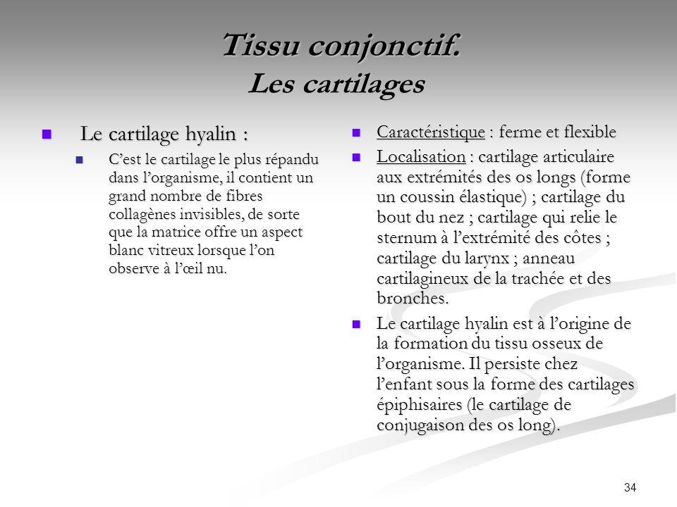 Tissu conjonctif. Les cartilages