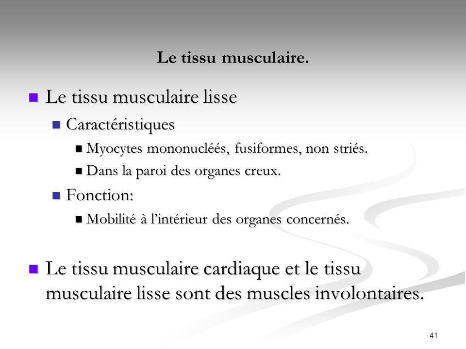 Le tissu musculaire. Le tissu musculaire lisse