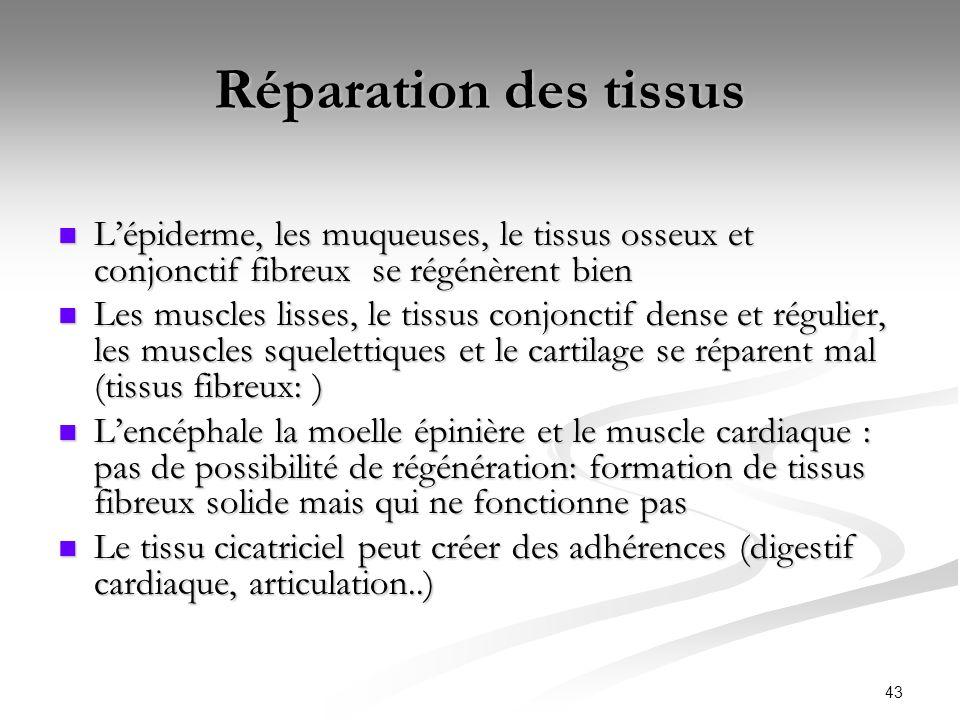 Réparation des tissus L'épiderme, les muqueuses, le tissus osseux et conjonctif fibreux se régénèrent bien.