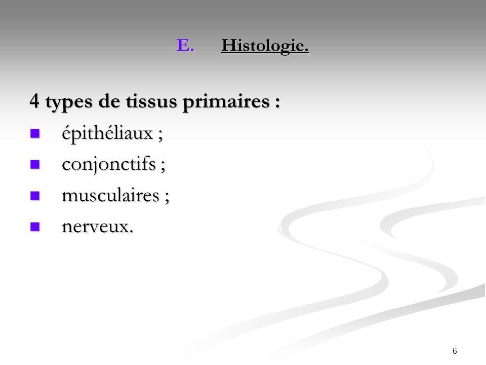 4 types de tissus primaires : épithéliaux ; conjonctifs ;