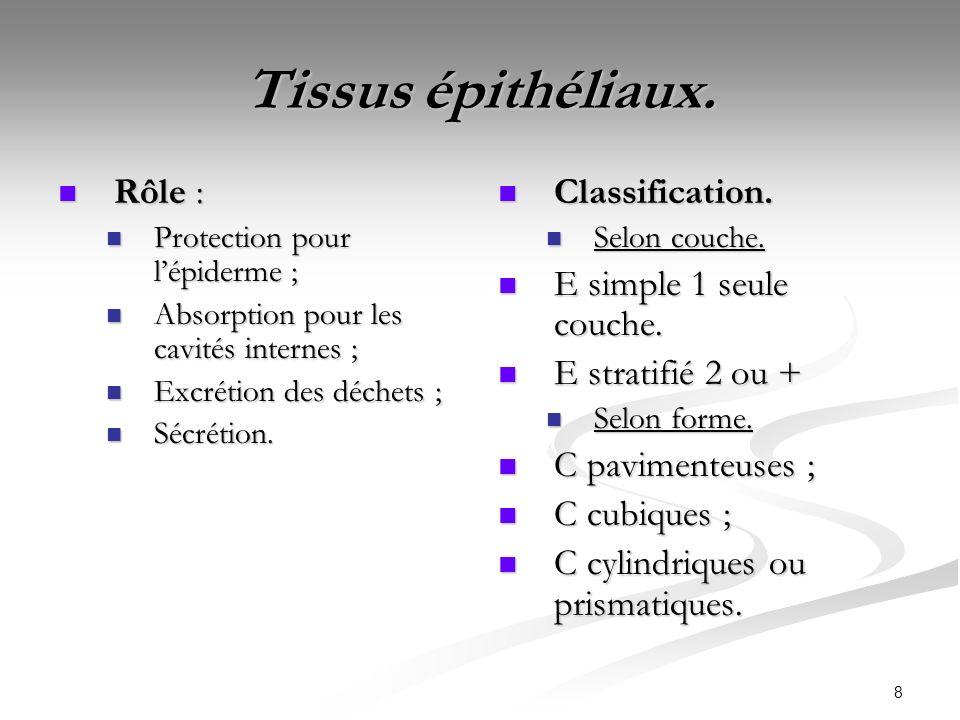 Tissus épithéliaux. Rôle : Classification. E simple 1 seule couche.
