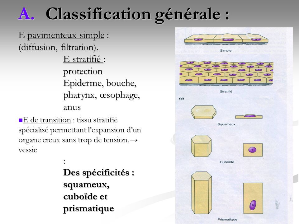 Classification générale :
