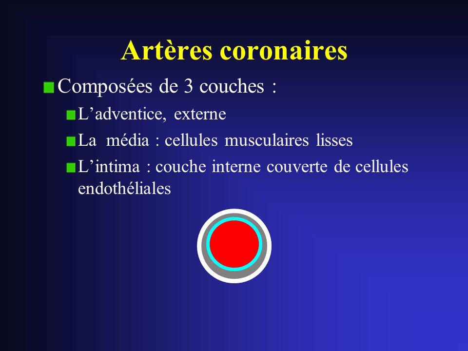 Artères coronaires Composées de 3 couches : L'adventice, externe