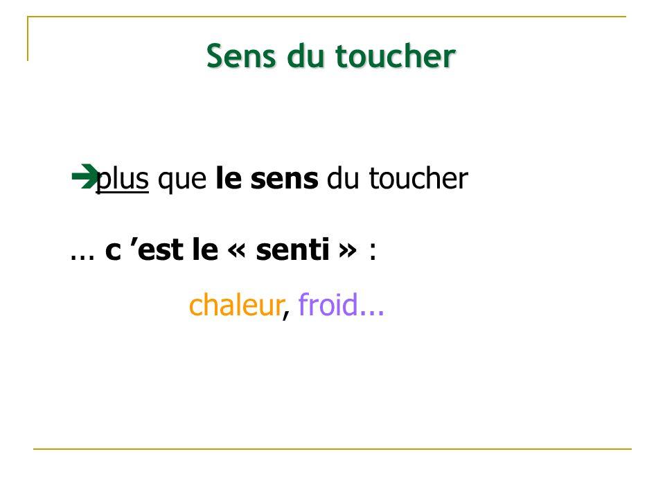 Sens du toucher plus que le sens du toucher ... c 'est le « senti » :
