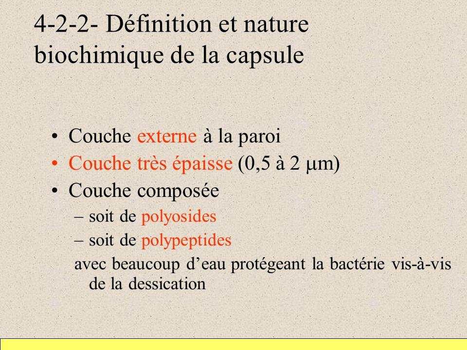 4-2-2- Définition et nature biochimique de la capsule