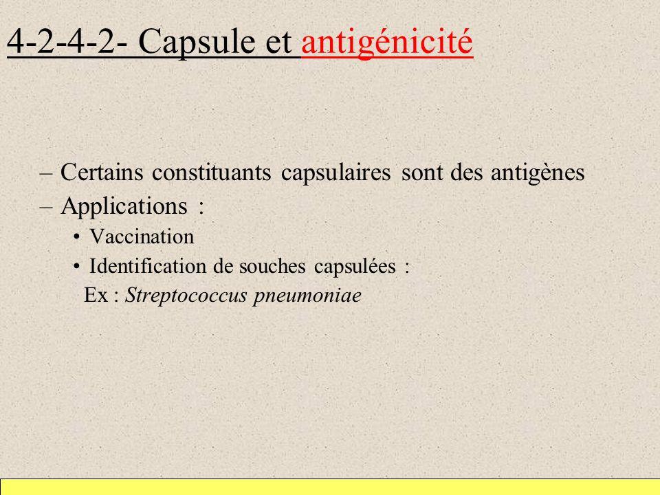 4-2-4-2- Capsule et antigénicité