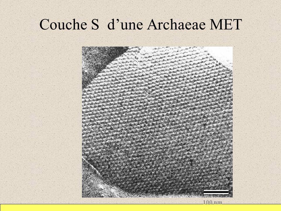Couche S d'une Archaeae MET