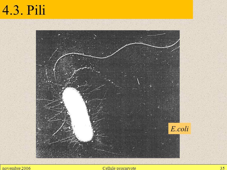 4.3. Pili E.coli novembre 2006 Cellule procaryote