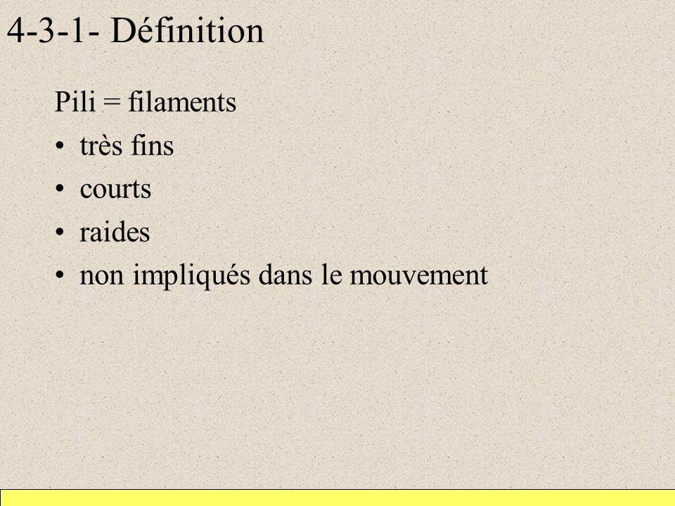 4-3-1- Définition Pili = filaments très fins courts raides