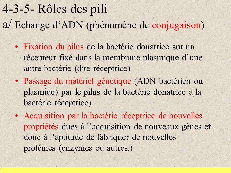 4-3-5- Rôles des pili a/ Echange d'ADN (phénomène de conjugaison)