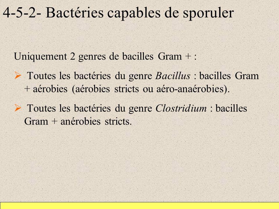 4-5-2- Bactéries capables de sporuler