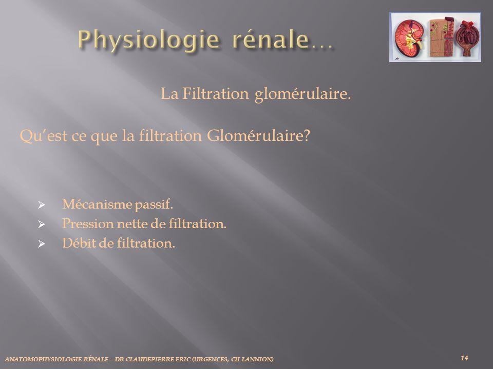 La Filtration glomérulaire.