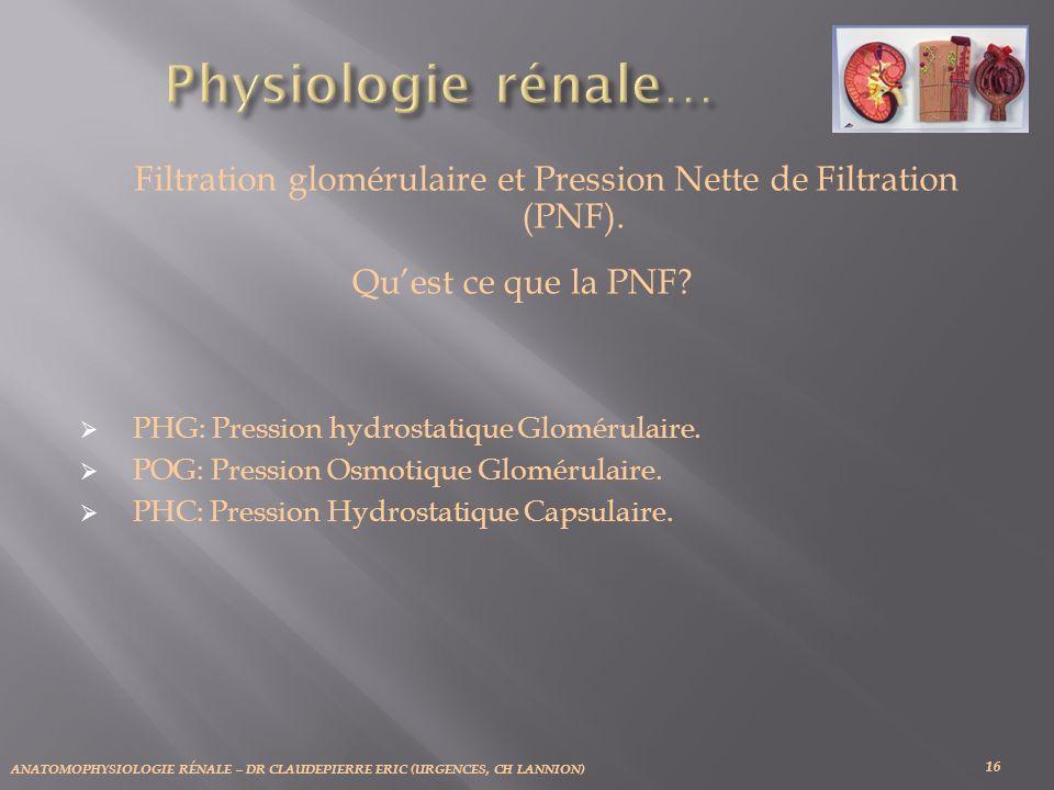 Filtration glomérulaire et Pression Nette de Filtration (PNF).