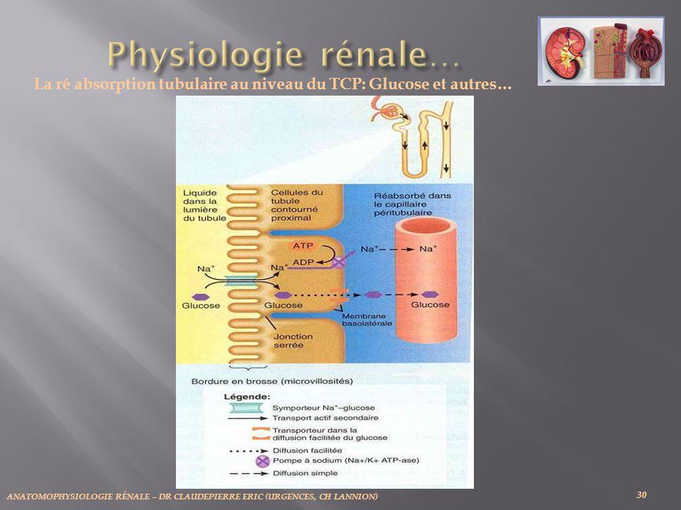 La ré absorption tubulaire au niveau du TCP: Glucose et autres…