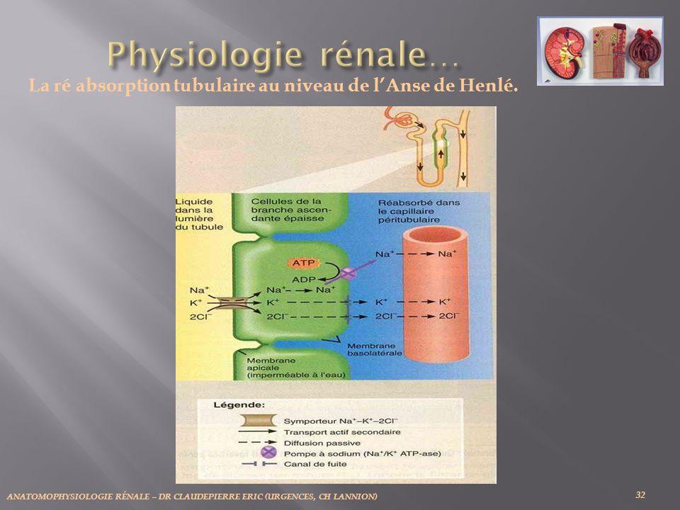 La ré absorption tubulaire au niveau de l'Anse de Henlé.
