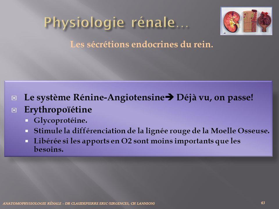 Les sécrétions endocrines du rein.