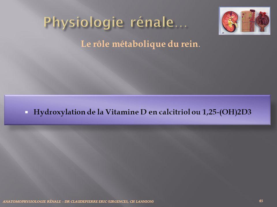 Le rôle métabolique du rein.