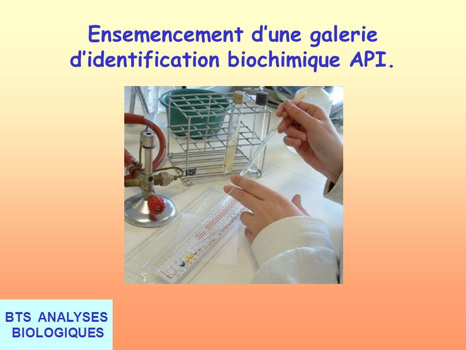 Ensemencement d'une galerie d'identification biochimique API.
