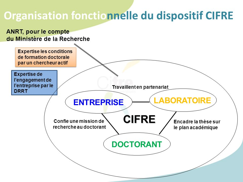 Organisation fonctionnelle du dispositif CIFREE